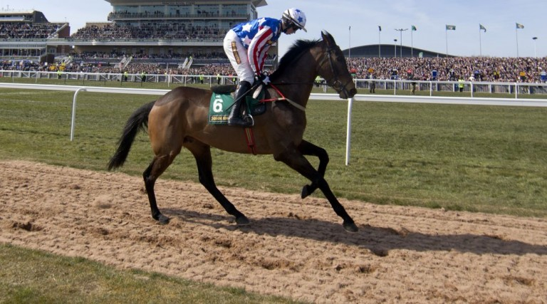 Special Tiara - Champion Chase odds